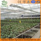 Agricoltura moderna che pianta il Seedbed mobile della serra del banco di Rooling