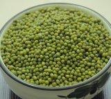 [لوو بريس] بيع بالجملة بروز طازج ينتقى جيّدة نوعية اللون الأخضر [مونغ بن]