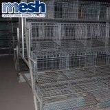 Cage de poulet de la couche d'équipement automatique (A) du châssis
