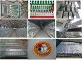 Cage automatique de couche de poulet d'A de matériel de ferme avicole de l'Ouganda