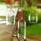 ガラス玉のガラスつぼの蝋燭およびMicrolandschaftのガラスビン