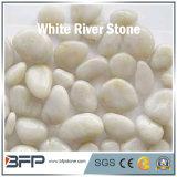 Alto guijarro blanco natural de la piedra del río del brillo usado para el jardín, paisaje