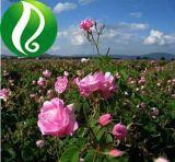 100% naturales de la piel de alta calidad de atención personal Orgánico Puro Aceite Esencial de Rosa