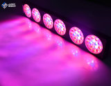 3W Chipe Red Blue Dual Spectrum LED Grow Light 270W