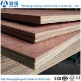 Pulse dos veces el Álamo Core de 1,8 mm de muebles de madera contrachapada de Bintangor