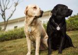 De promotie Nieuwe Moderne Markering van de Hond van het Metaal van de Douane van het Ontwerp