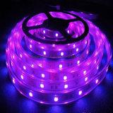 Striscia di RGB SMD 5050 LED di rendimento elevato per esterno dell'interno
