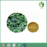 Выдержка листьев ПЛЮЩА 100% естественная Hederacoside c 2%~10%