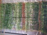 Искусственний ПЛЮЩ листьев для украшения стены вися