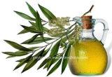 순수한 자연적인 차 나무 기름 정유, 바디 안마 기름