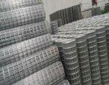 Il PVC ha ricoperto la rete metallica saldata galvanizzata, Olanda ha saldato la rete metallica