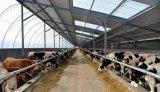 Azienda agricola prefabbricata della struttura d'acciaio liberata di (KXD-SSB1193)