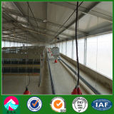 Curtain Glass Wall (XGZ PH 030)를 가진 가벼운 Steel Structure Poultry House