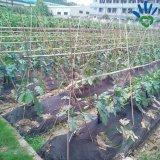 Tissu non tissé UV du tissu pp de lutte contre les mauvaises herbes d'agent de 3%