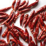 La nouvelle récolte de légumes de bonne qualité 4-7cm Tian Ying Chili