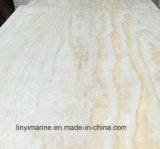 Madera contrachapada del pino de la alta calidad para el mercado de México