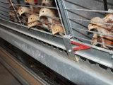 La batterie de poulette de ferme avicole/cage automatique pour le fermier à vendre la poulette met en cage le système (le bâti de H)