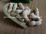 El mejor cacahuete de la calidad de la nueva cosecha en shell