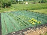 高品質の緑色の地被植物ファブリック