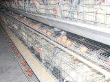 نوع طبقة دجاجة (دجاجة) قفص نظامة يستعمل في دواجن منزل