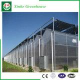 Huis van de Serre van het Polycarbonaat van de Spanwijdte van Muti het Plantaardige Groene met KoelSysteem