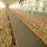 Prefabricated 강철 구조물 닭 가금 Breeding 집