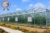 녹색 집에서 증가하는 Vegetab
