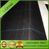 Venda direta da Fábrica da China de tecido preto da tampa do solo de PP
