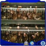 Impresa di pollo prefabbricata commerciale del pollame dell'animale domestico della struttura d'acciaio