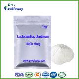 Suppléments alimentaires plantarum Nutraceuticals de marque de distributeur de Probiotics de lactobacille