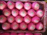 Nuevo FUJI rojo fresco Apple (138/150/175/198#)