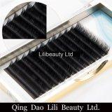 Lilibeauty 2017 très doux neufs possèdent la prolonge plate de cil d'ellipse de marque