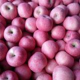 Cámara frigorífica de buena calidad de color rojo manzana FUJI