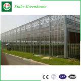 Vidrio del diseño moderno/invernadero de múltiples funciones del invernadero plástico/invernadero de acero ligero