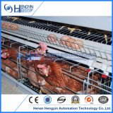 Bester Entwurfs-Huhn-Schicht-Rahmen mit automatischem Trinker-System