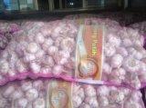 Sacchetto cinese fresco della maglia di buona qualità dell'esportazione che imballa aglio bianco puro