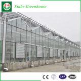 野菜か庭または花または農場のプラスチックフィルムの温室