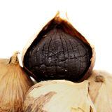 [فدا] مادّة حرّة يتخمّر ثوم أسود لأنّ يصحّ طعام