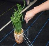 Tecidos de PP de plástico Agricultura Tapete de controle de plantas daninhas Filme Mulch Nersury sementes para a cobertura de solo