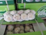 aglio fresco bianco puro 6cm di 4cm 5cm 5.5cm