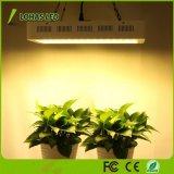 a planta do diodo emissor de luz de 300W 600W cresce o espetro que cheio promovido luz o diodo emissor de luz interno cresce claro para a flor hidropónica de Veg da planta e a planta interna