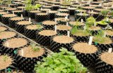 Alta qualità ma POT più poco costoso del dispositivo di controllo della radice della pianta/contenitore di potatura della radice