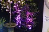 IP65 LED de iluminación de jardín paisaje protagonismo con Spike