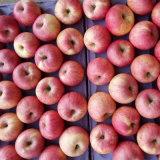 신선한 빨간 Qinguan Apple의 수출된 표준 품질