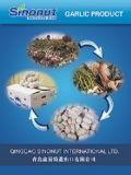 China Normal White Garlic 3p/10kg Carton (5.0-5.5-6.0cm)