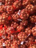 L'Échalote de nouvelles cultures de légumes chinois avec une haute qualité d'exportation