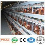 Pollo automatico di Forlayer della gabbia della strumentazione dell'azienda avicola