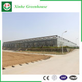 Serra di vetro commerciale di agricoltura