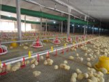 Syetemに販売のためのプラスチック鶏の送り装置を入れる農業