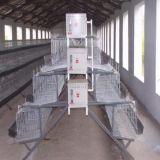 Angemessener Schicht-Ei-Huhn-Rahmen-/Geflügelfarm-Haus-Entwurf